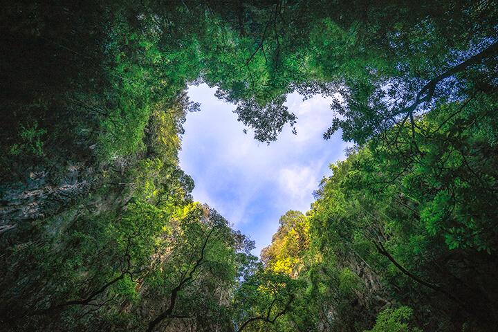 citate despre natura si ecologie